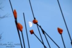 Wiikiaami Tips and Moon